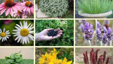 گزارش اندازه بازار گیاهان دارویی در ایران